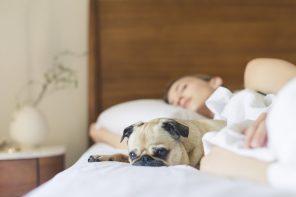 Kvinde sover i seng med hund ved siden af